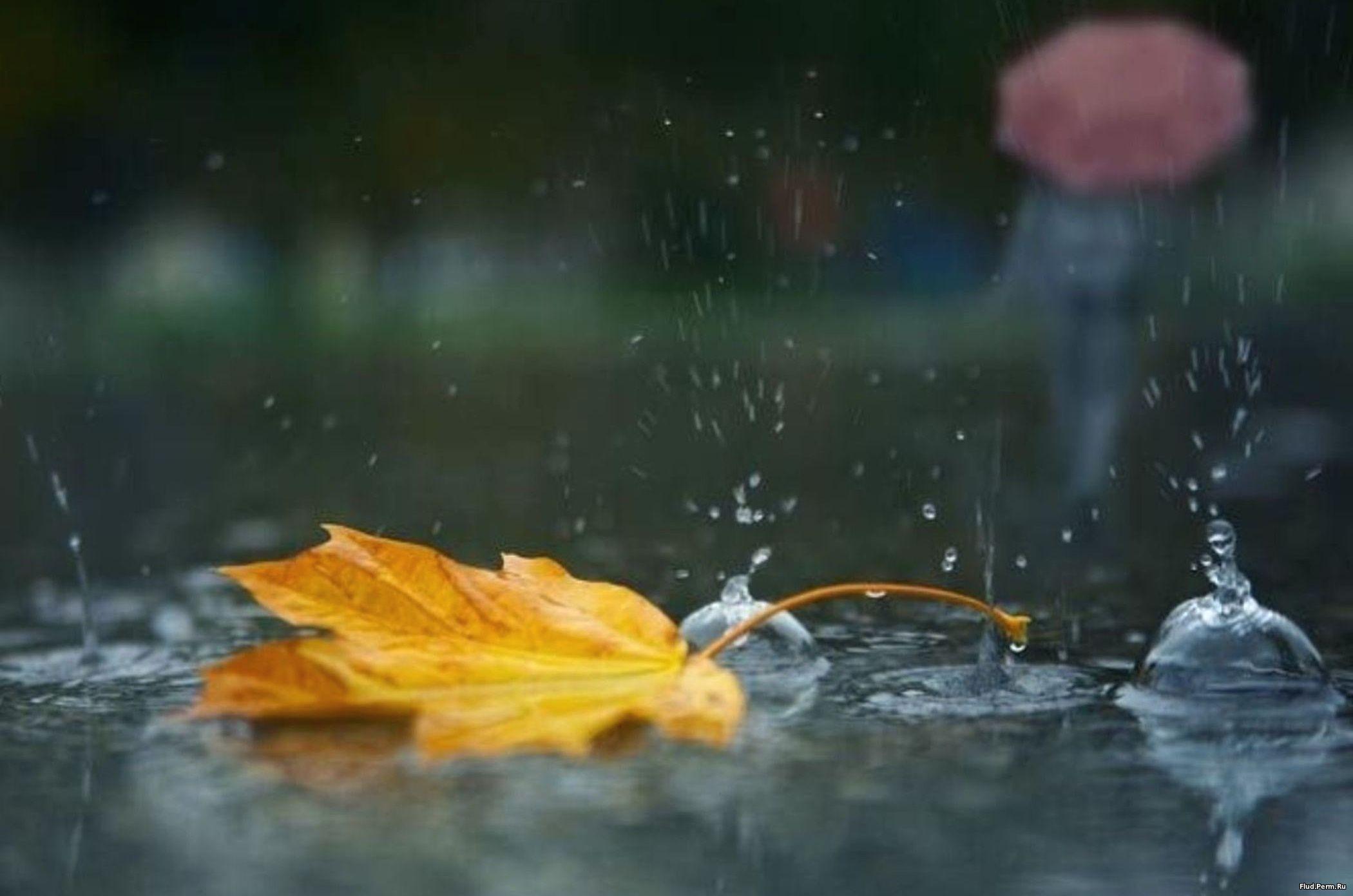 Фото золотой дощ 18 фотография